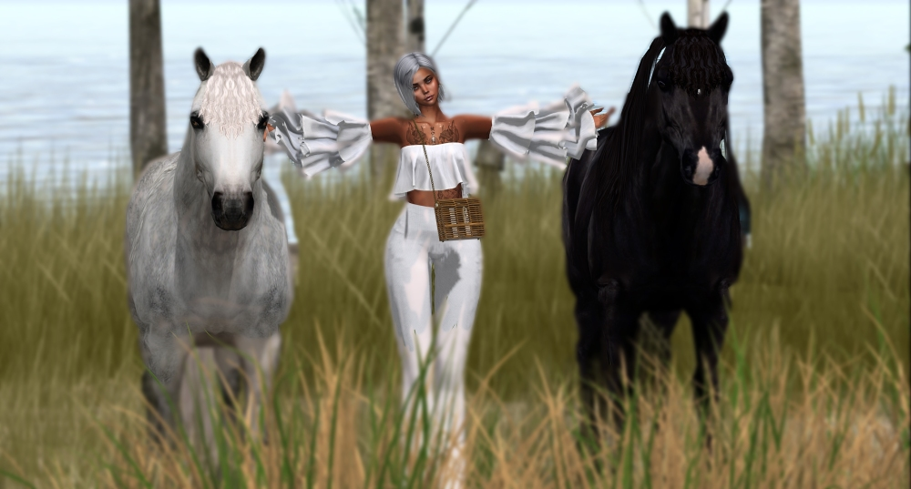 20200510 Horse